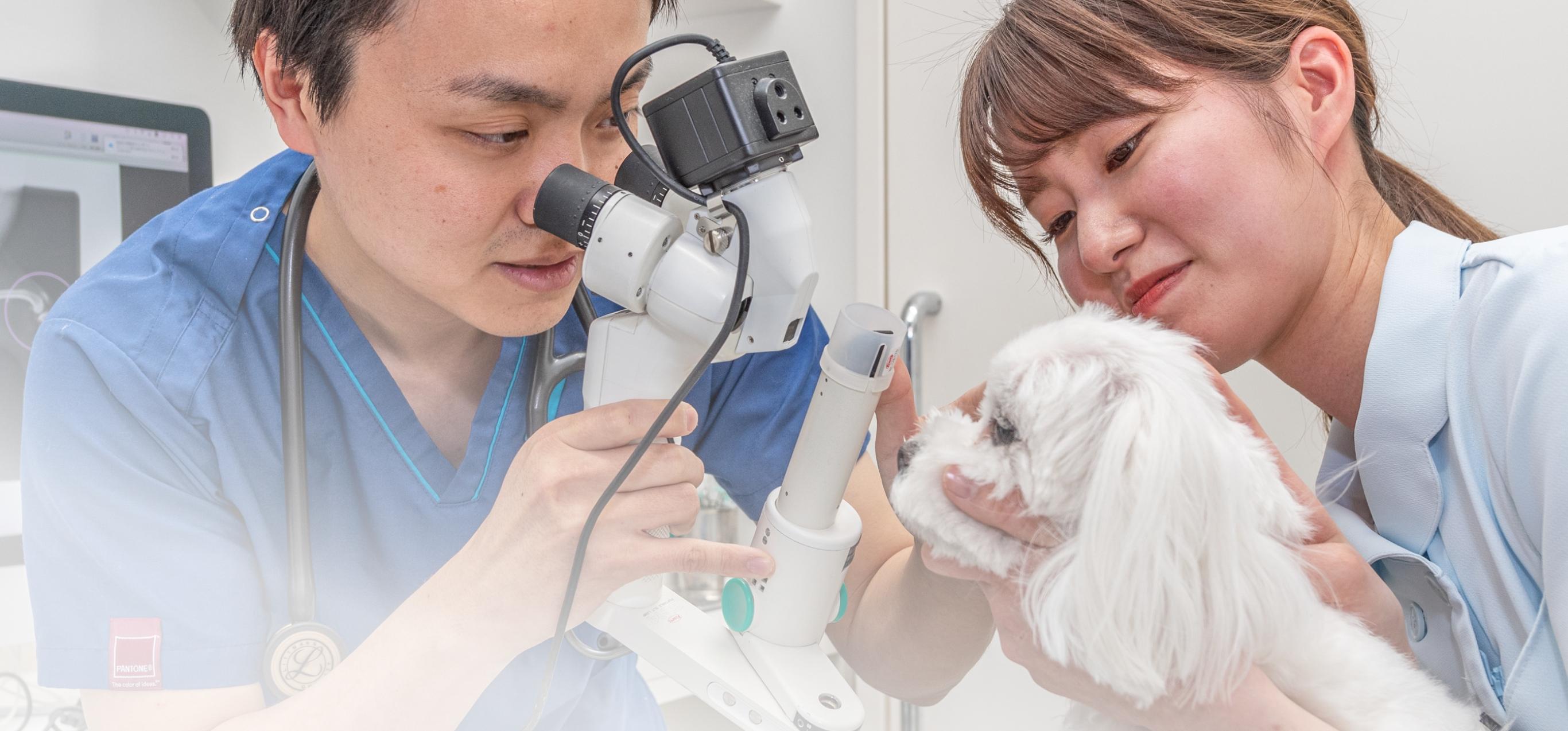信頼のおける、質の高い獣医療を