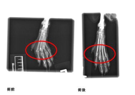 後肢中足骨骨折